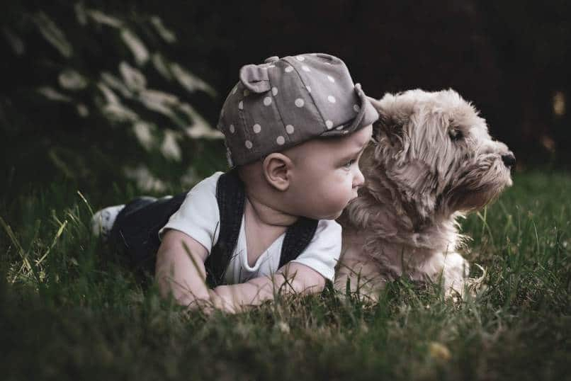 Best Hypoallergenic Dogs For Kids – Our Top 10 Dog Breeds