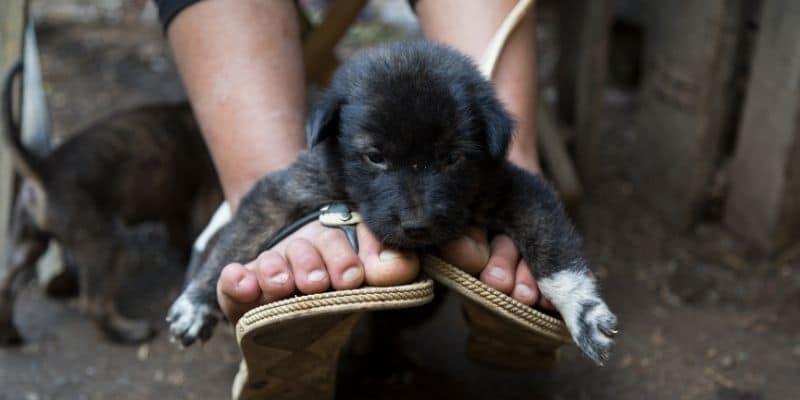 my dog sits on my feet like this black puppy